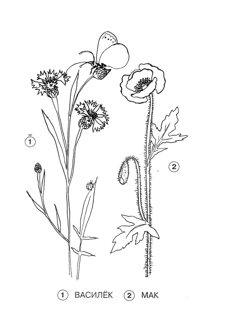 Раскраска Цветы на лугу | Природа