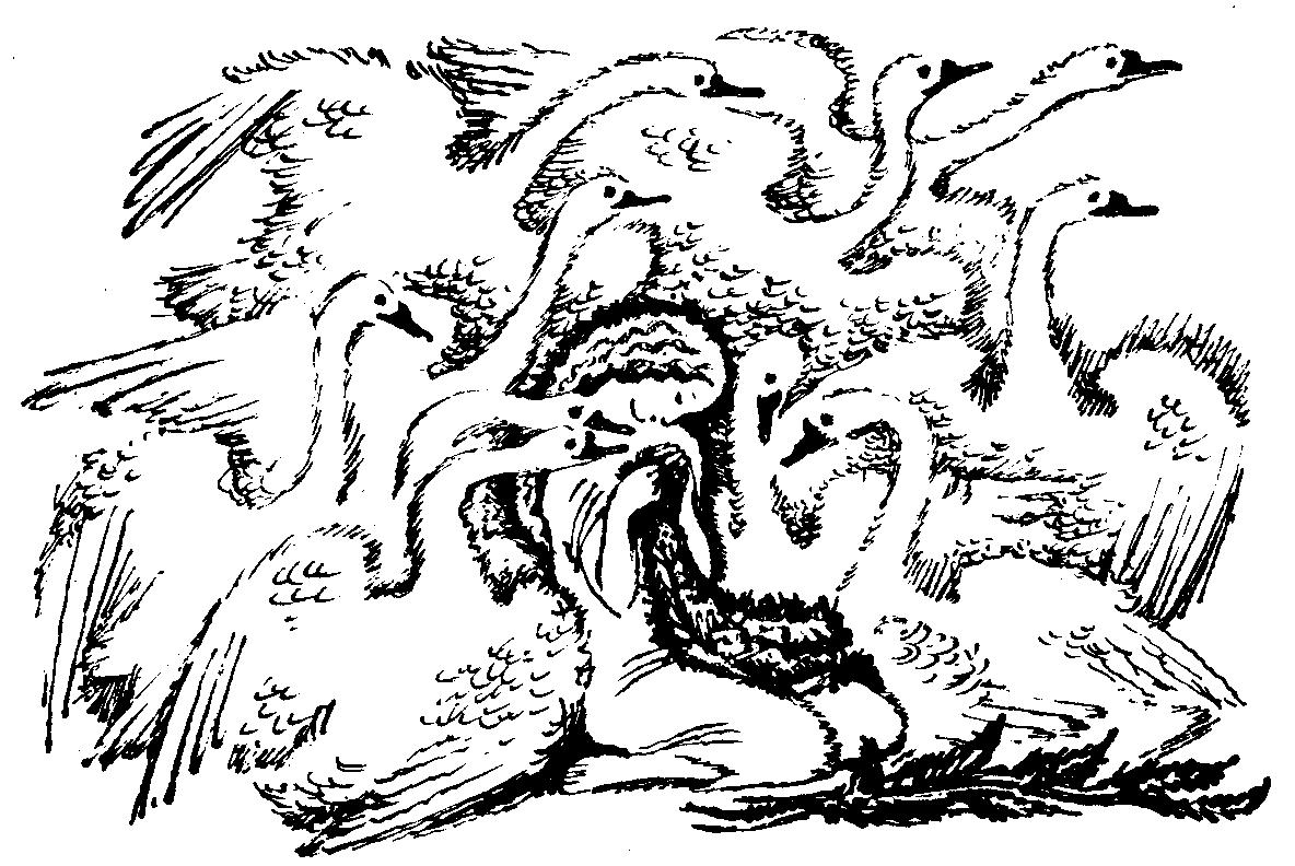 Раскраски Дикие лебеди | Раскраски из мультиков