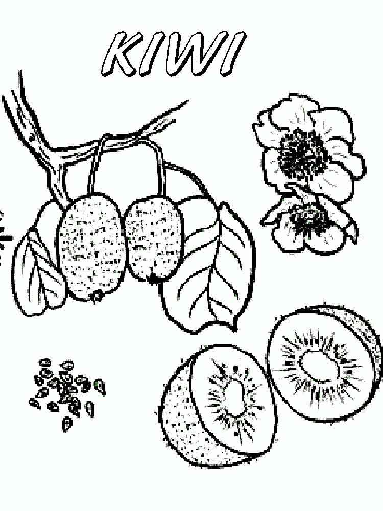Раскраска Киви | Овощи и фрукты