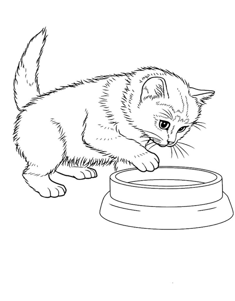 Раскраска кошка для детей | Животные