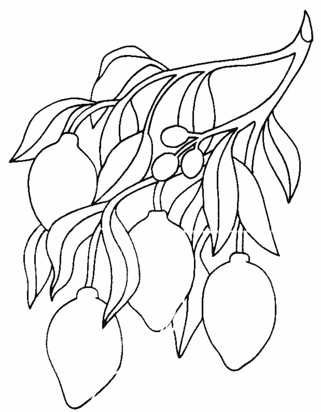 Раскраска Лимон | Овощи и фрукты