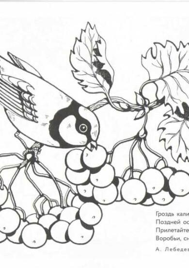 Раскраска Бабочки   Природа